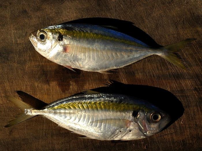 Loại cá có chứa nhiều dưỡng chất giá trị cho cơ thể con người